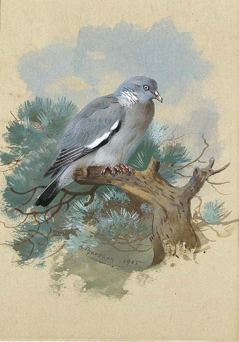 Wood Pigeon, Watercolour by Archibald Thorburn (1860-1935, United Kingdom)