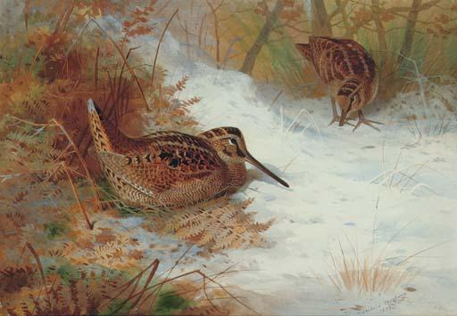 Woodcock In Snow, Watercolour by Archibald Thorburn (1860-1935, United Kingdom)
