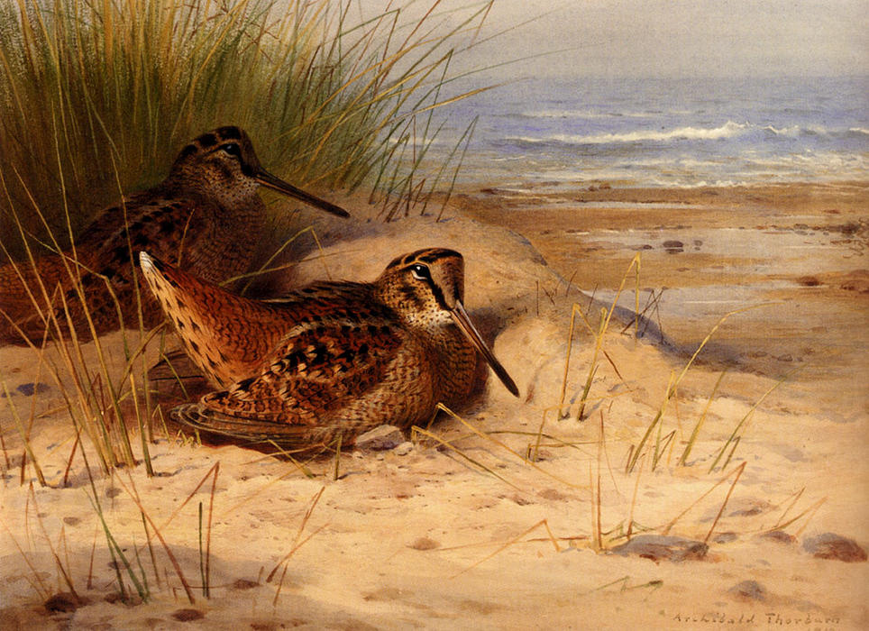 Woodcock Nesting On A Beach, Watercolour by Archibald Thorburn (1860-1935, United Kingdom)