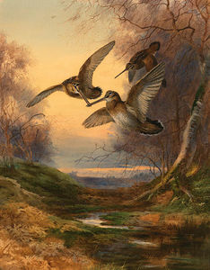 Archibald Thorburn - Woodcock Roding At Sunset