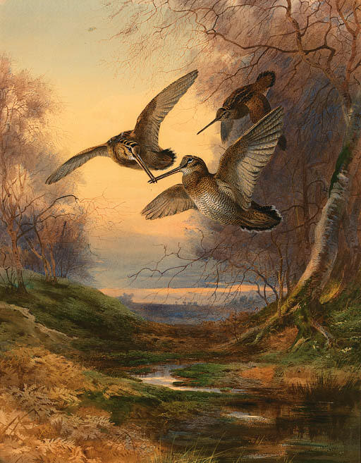 Woodcock Roding At Sunset, Watercolour by Archibald Thorburn (1860-1935, United Kingdom)