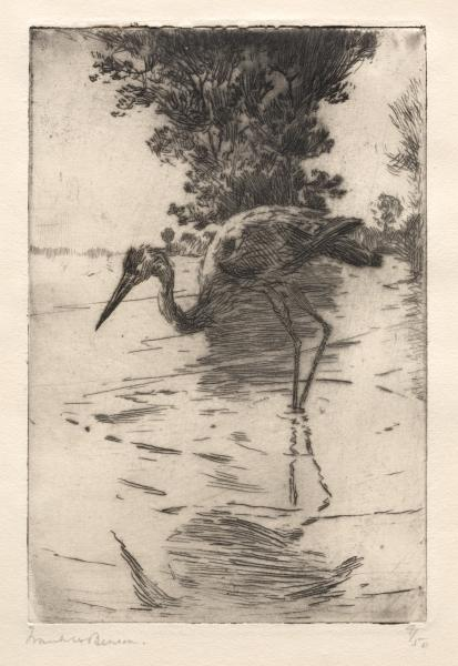 Blue Heron, Etching by Frank Weston Benson (1862-1951, United States)