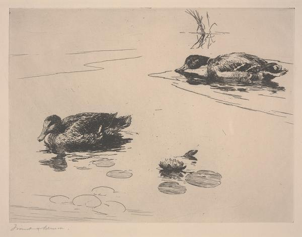 Untitled (Ducks), Etching by Frank Weston Benson (1862-1951, United States)