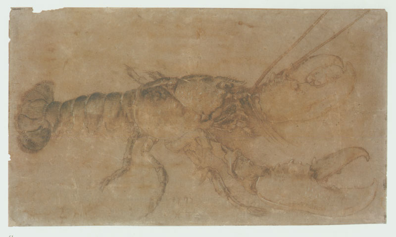 Order Museum Quality Copies | Lobster, 1495 by Albrecht Durer (1471-1528, Italy) | ArtsDot.com