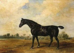 James Ward - The Black Horse