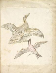 Jean-Baptiste Oudry - Duck and Bird, both with Wings Extended