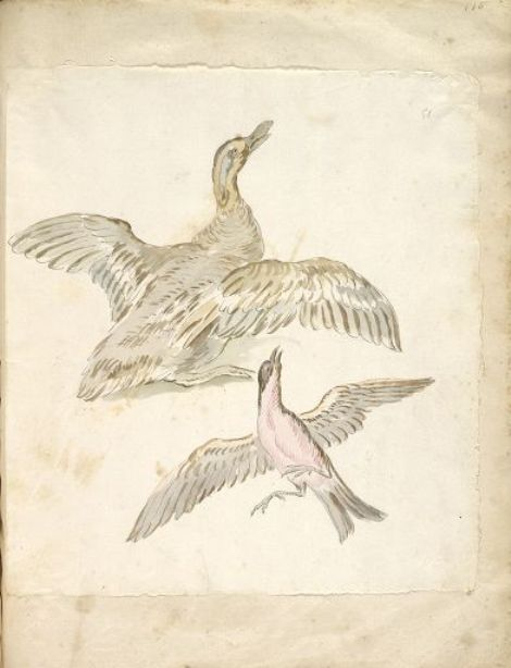 Duck and Bird, both with Wings Extended by Jean-Baptiste Oudry (1686-1755, France) | Museum Art Reproductions | ArtsDot.com