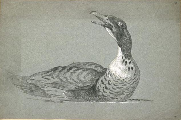 Duck swimming by Jean-Baptiste Oudry (1686-1755, France) | Art Reproduction | ArtsDot.com