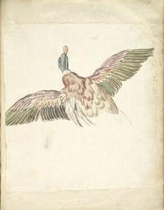 Jean-Baptiste Oudry - Duck with Wings Extended, Seen from Behind