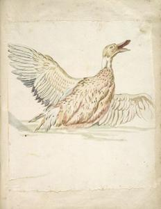 Jean-Baptiste Oudry - Duck with Wings Extended
