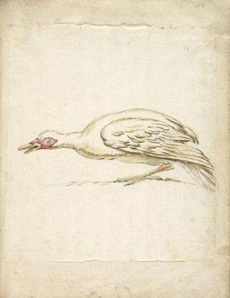 Order Print On Canvas Hunching Duck in Profile to the Left by Jean-Baptiste Oudry (1686-1755, France) | ArtsDot.com | Order Poster On Canvas Hunching Duck in Profile to the Left by Jean-Baptiste Oudry (1686-1755, France) | ArtsDot.com
