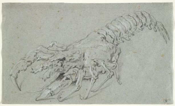 Langouste (spiny lobster) by Jean-Baptiste Oudry (1686-1755, France)