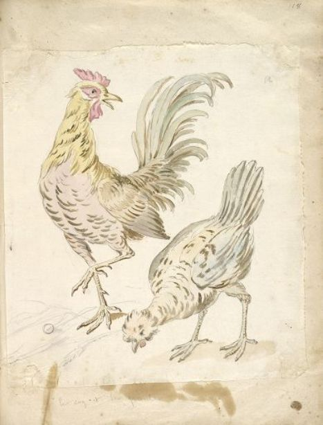 Rooster and Hen by Jean-Baptiste Oudry (1686-1755, France)