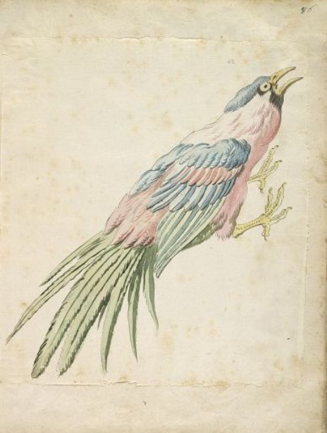 Squawking Bird with Talons Extended to the Right by Jean-Baptiste Oudry (1686-1755, France) | Painting Copy | ArtsDot.com