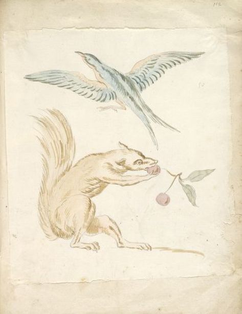 Squirrel Eating Cherries and Bird with Wings Extended by Jean-Baptiste Oudry (1686-1755, France)
