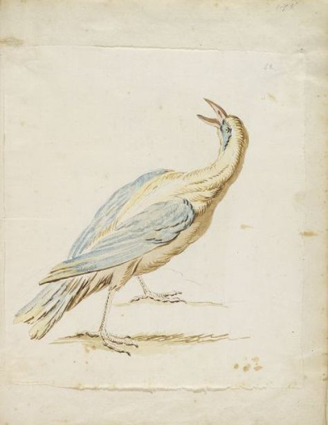 Standing Bird Looking Upward and Behind by Jean-Baptiste Oudry (1686-1755, France)