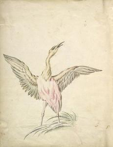 Jean-Baptiste Oudry - Standing Bird with Wings Outspread