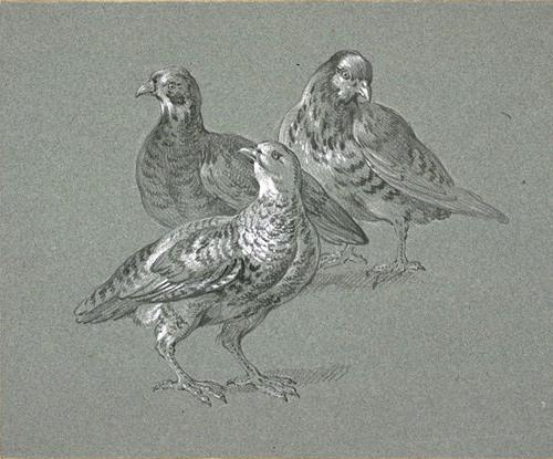 Trois perdrix by Jean-Baptiste Oudry (1686-1755, France)