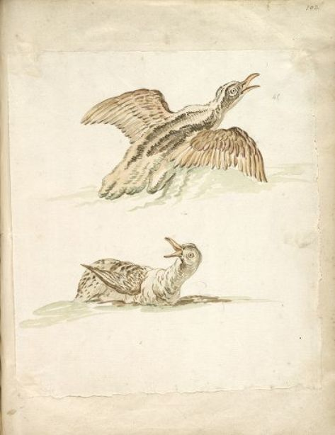 Two Ducks in the Water, One Taking Flight by Jean-Baptiste Oudry (1686-1755, France)