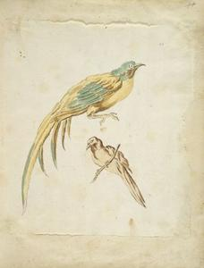 Jean-Baptiste Oudry - Two Perched Birds