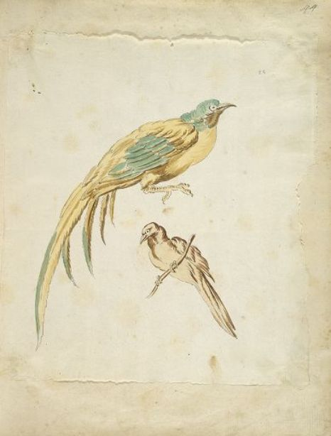 Two Perched Birds by Jean-Baptiste Oudry (1686-1755, France) | Museum Art Reproductions | ArtsDot.com