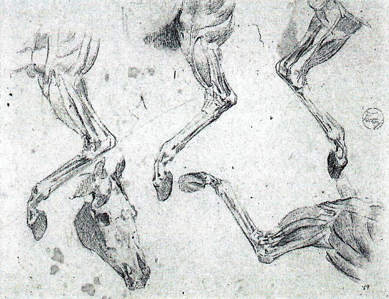 Anatomical study of a horse by Mariano Fortuny (1871-1949, Spain)
