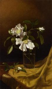 Martin Johnson Heade - Cherokee Roses in a Glass..