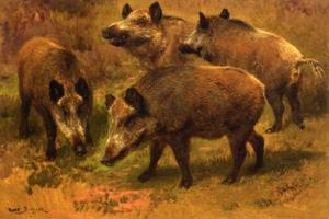 Rosa Bonheur - Four Boars in a Landscape