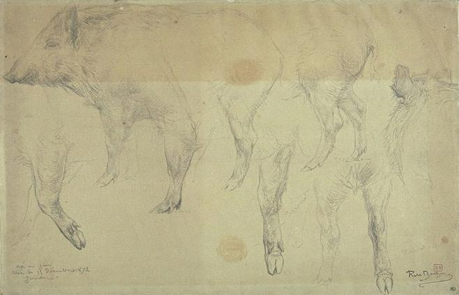 Seven studies of female wild boar by Rosa Bonheur (1822-1899, France) | ArtsDot.com