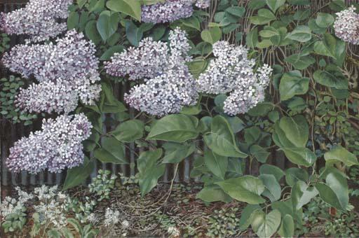 Lilac by Stanley Spencer (1891-1959, United Kingdom) | ArtsDot.com