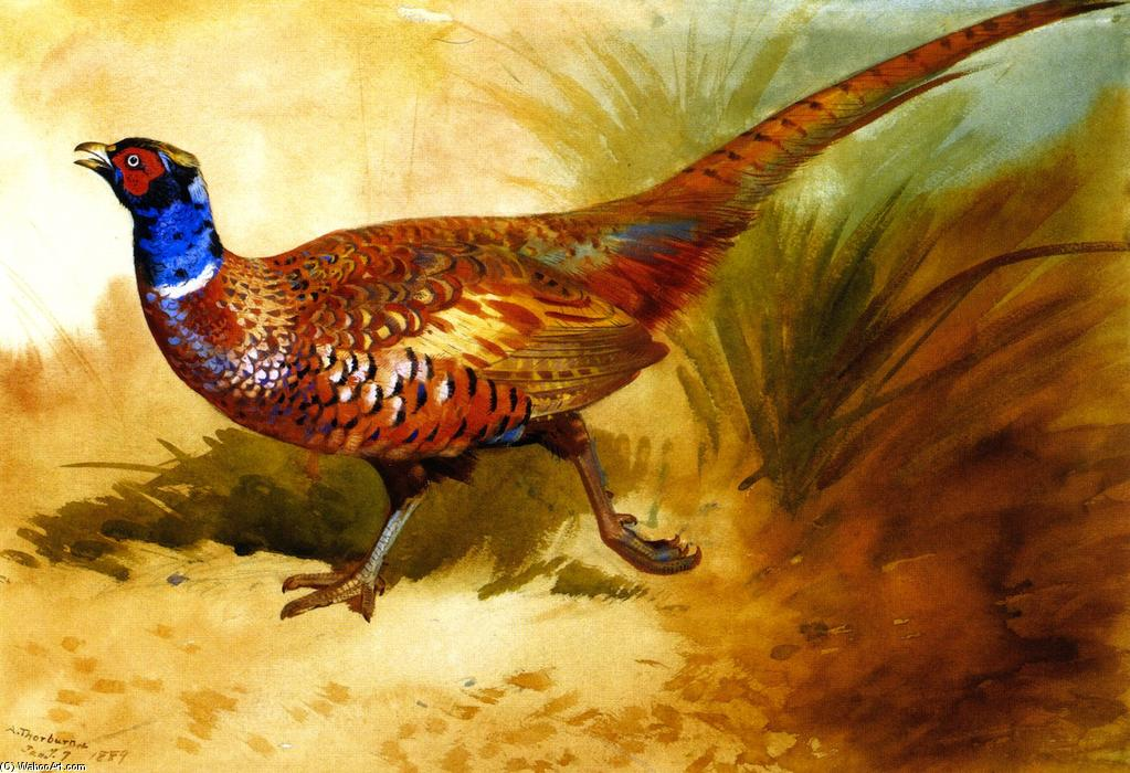 Cock Pheasant, Watercolour by Archibald Thorburn (1860-1935, United Kingdom)