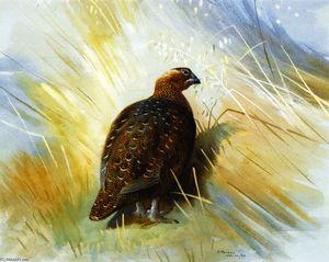Archibald Thorburn - Grouse