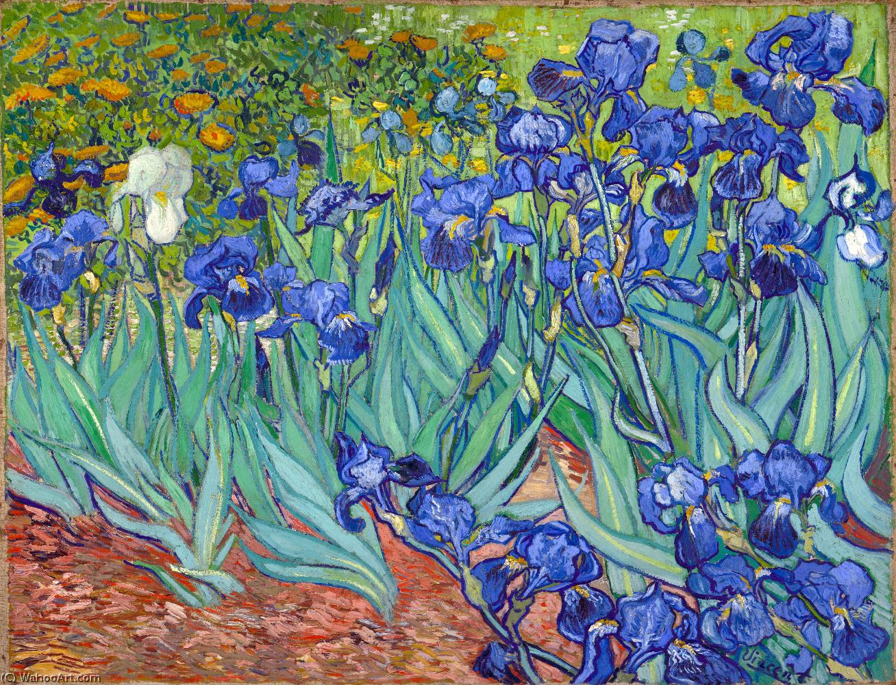Irises, 1889 by Vincent Van Gogh (1853-1890, Netherlands) | Reproductions Vincent Van Gogh | ArtsDot.com