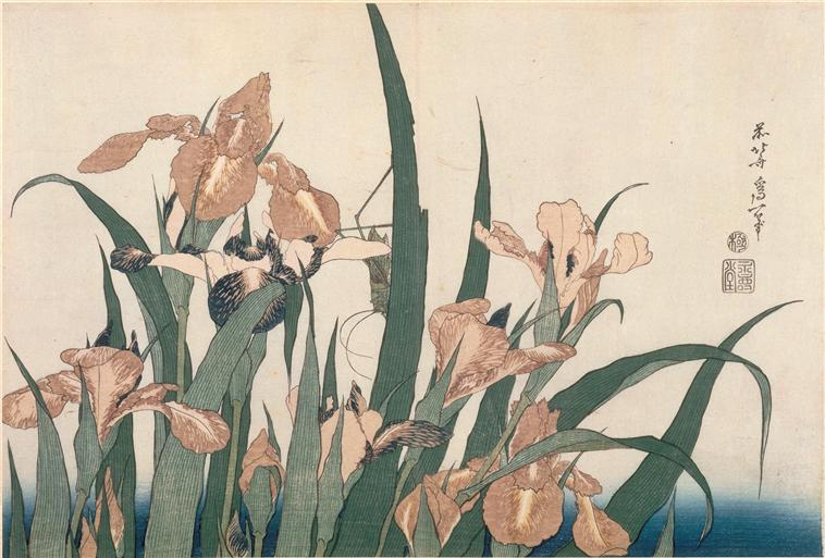 Irises and Grasshopper by Katsushika Hokusai (1760-1849, Japan) | Museum Quality Reproductions | ArtsDot.com
