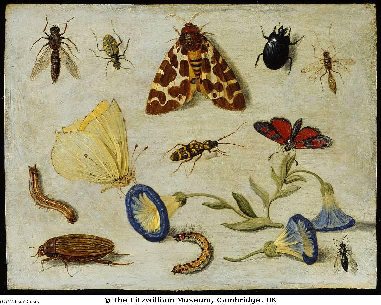Insects, Oil On Copper by Jan Van Kessel (1641-1680, Belgium)