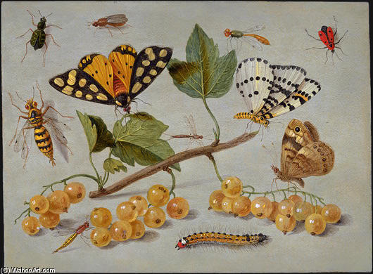 Butterflies and Insects, Oil On Copper by Jan Van Kessel (1641-1680, Belgium)