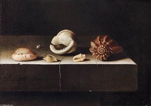 Adriaen Coorte - Five Shells on a Slab of Stone