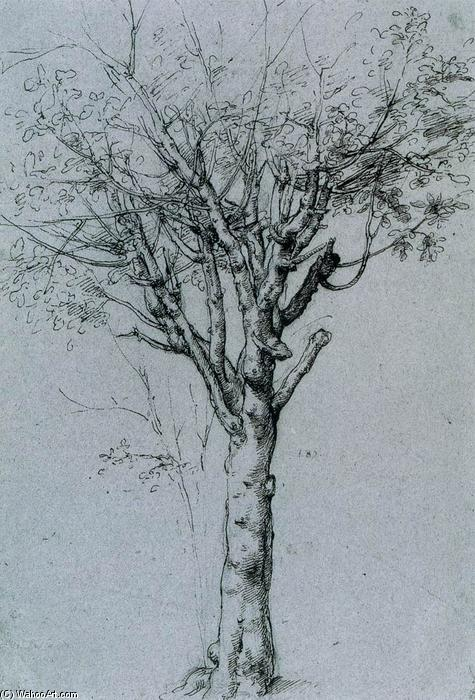 Study of a Tree by Cesare Da Sesto (1477-1523, Italy) | Art Reproduction | ArtsDot.com