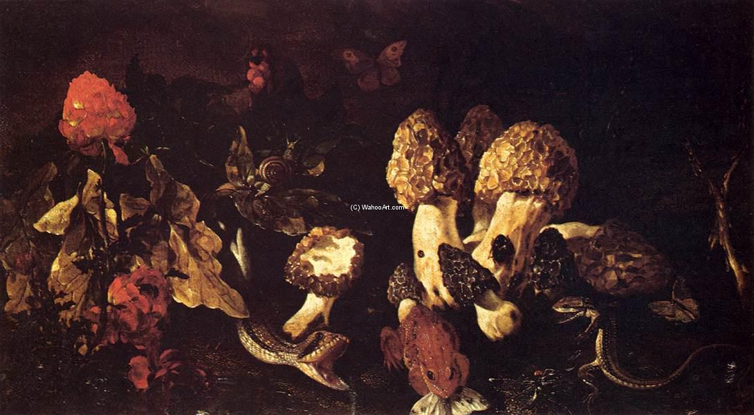 Still-Life with Fungi, Oil On Canvas by Paolo Porpora (1617-1673, Italy)