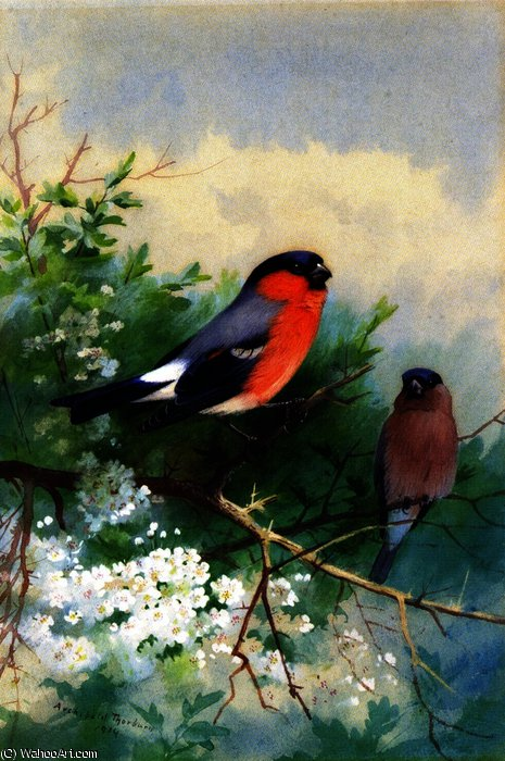 A Pair of Bullfinches, Watercolour by Archibald Thorburn (1860-1935, United Kingdom)