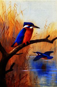 Archibald Thorburn - A Pair of Kingfishers