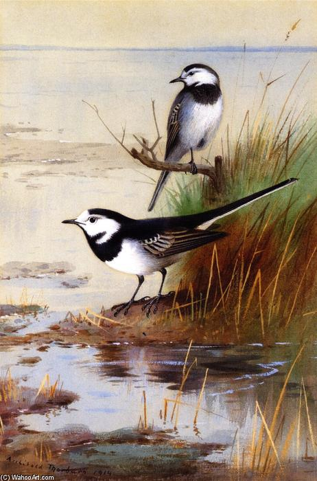 A Pair of Pied Wagtails, Watercolour by Archibald Thorburn (1860-1935, United Kingdom)