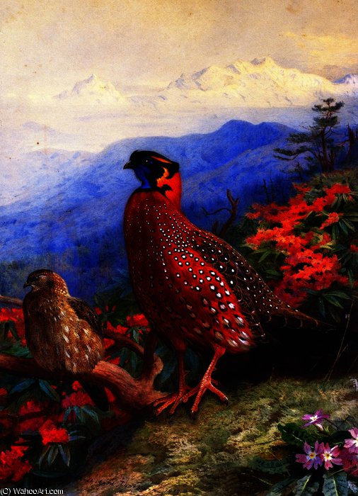 A Pair of Satyr Tragopans, Watercolour by Archibald Thorburn (1860-1935, United Kingdom)