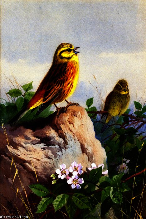 A Pair of Yellowhammers, Watercolour by Archibald Thorburn (1860-1935, United Kingdom)