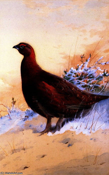 A Red Grouse in the Snow, Watercolour by Archibald Thorburn (1860-1935, United Kingdom)