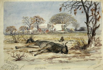 Dead Bridled Gnu Near Covered Wagons by Thomas Baines (1820-1875, United Kingdom)