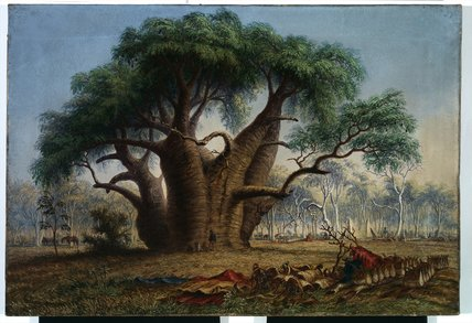 Gouty Stem Tree, Adansonia Gregorii by Thomas Baines (1820-1875, United Kingdom)