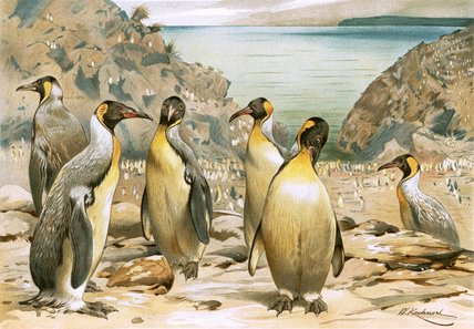 Giant Penguins by Friedrich Wilhelm Kuhnert (1865-1926, Poland) | Museum Quality Reproductions | ArtsDot.com