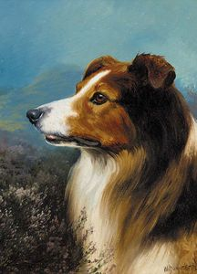 Wilson Hepple - A Collie In A Moorland La..