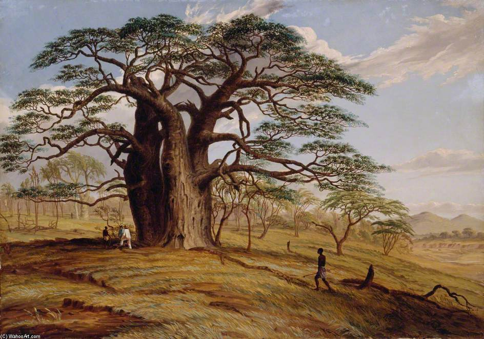 A Baobab Near The Bank Of The Lue by Thomas Baines (1820-1875, United Kingdom)